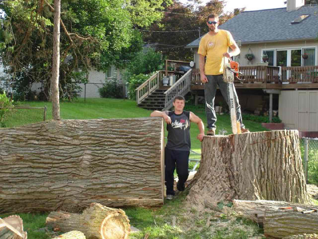 Choosing The Right Tree Removal Service Can Save You Money And Headaches