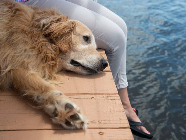 Dog Urination – Know The Reasons For Dog Urination Problems